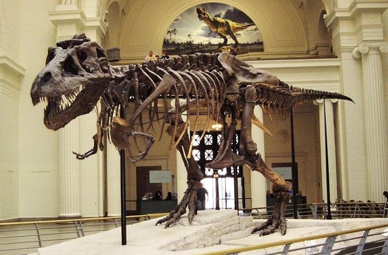 Среди знаменитостей растет тренд на останки динозавров