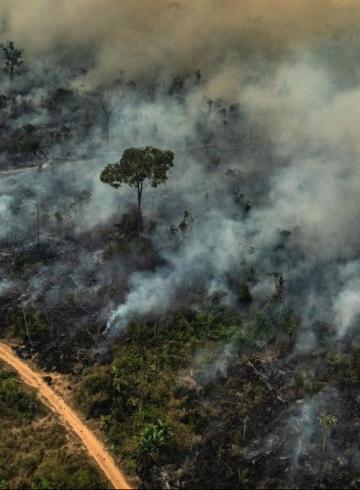 Пожары в Амазонии финансируются обувной индустрией?